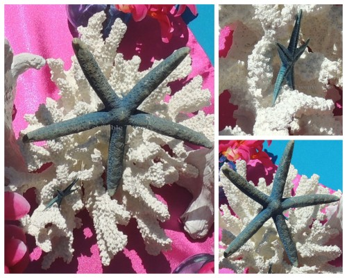 Coral & starfish collage