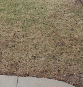 INSPIRATION: Crunchy, ugly, brown grass that just teases us with sprigs of green. :-(