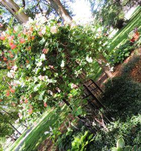 INSPIRATION: Our neighbors' fabulous honeysuckle arbor!